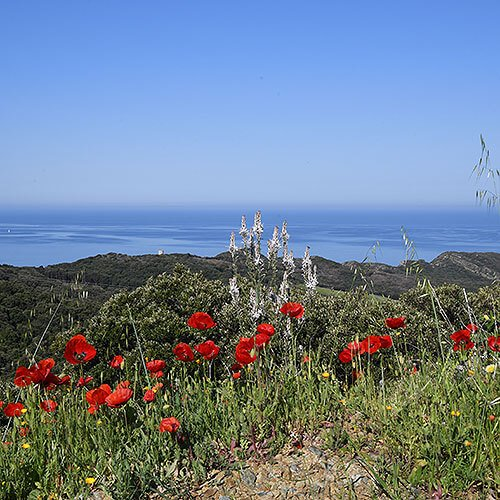 View over the Mediterranean Sea with Poppies