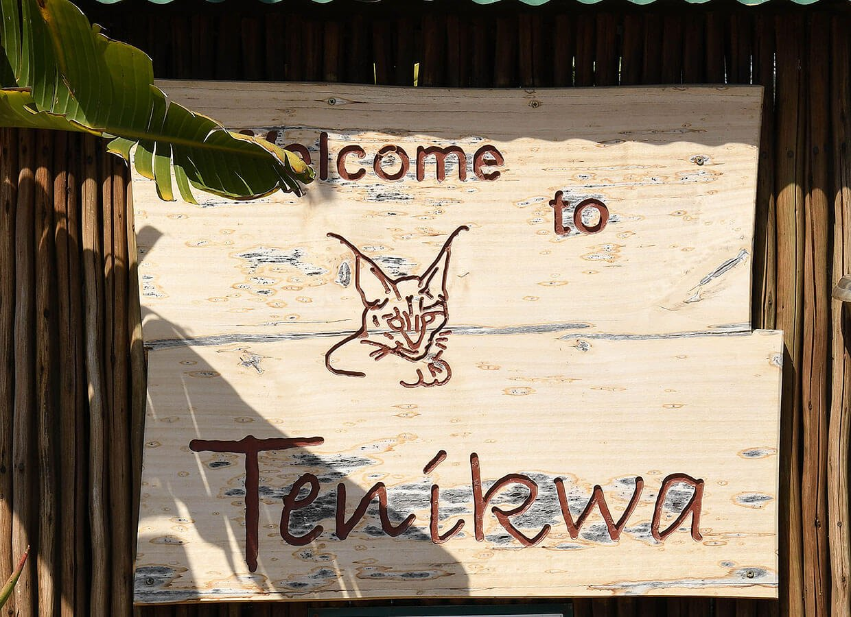 Welcomer at Tenikwa Awareness & Rehabilitation Center