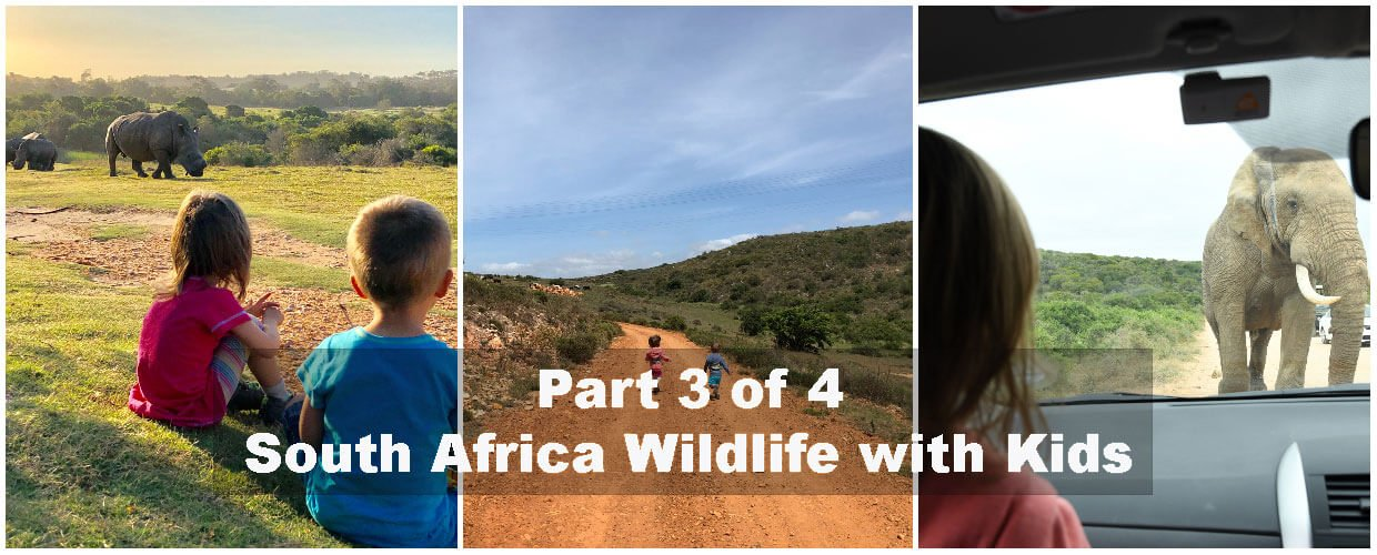 South Africa with kids - Eastern Cape trip