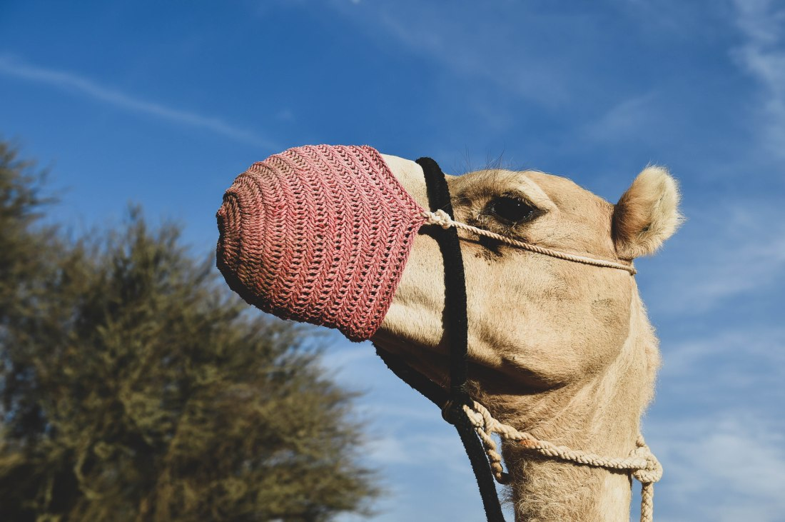 Camel with Crochet