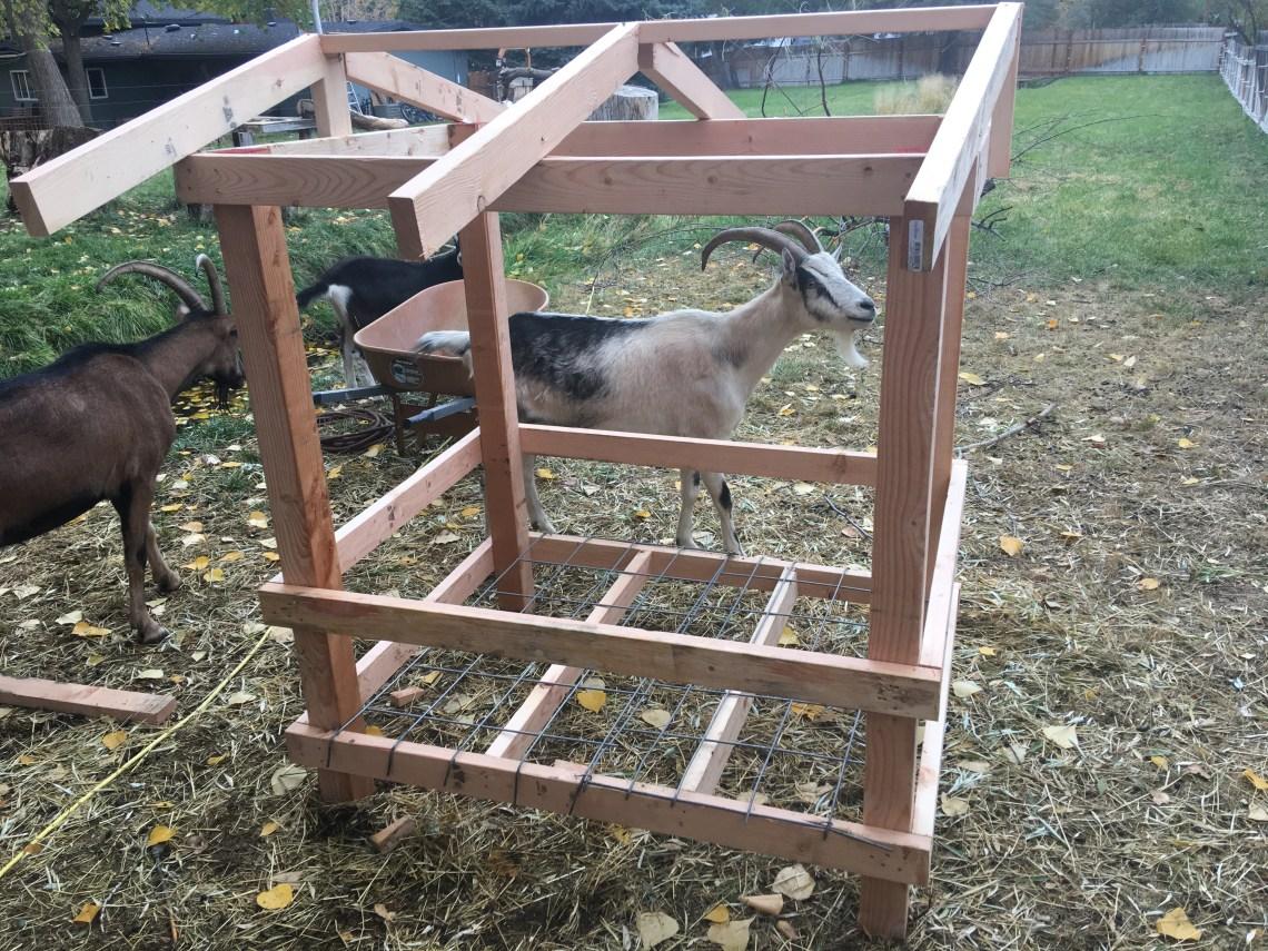 horned goat feeder