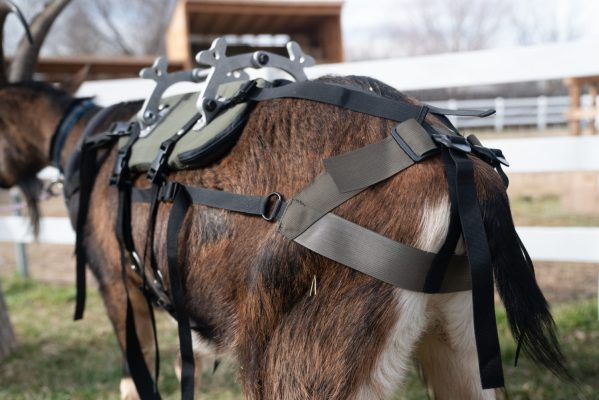 pack goat saddle