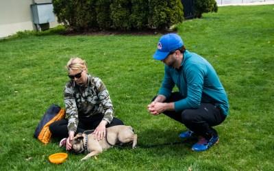 Dog Psychology Before Dog Training