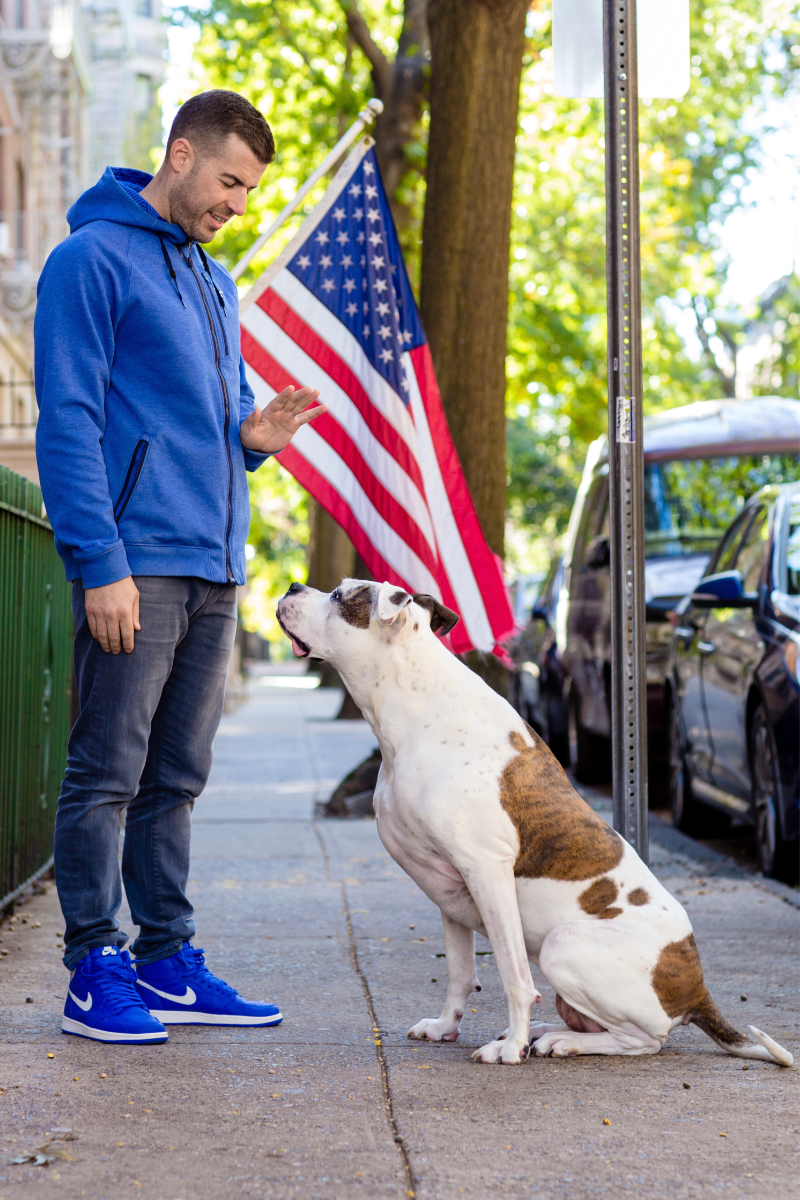 Dog Training Hoboken NJ