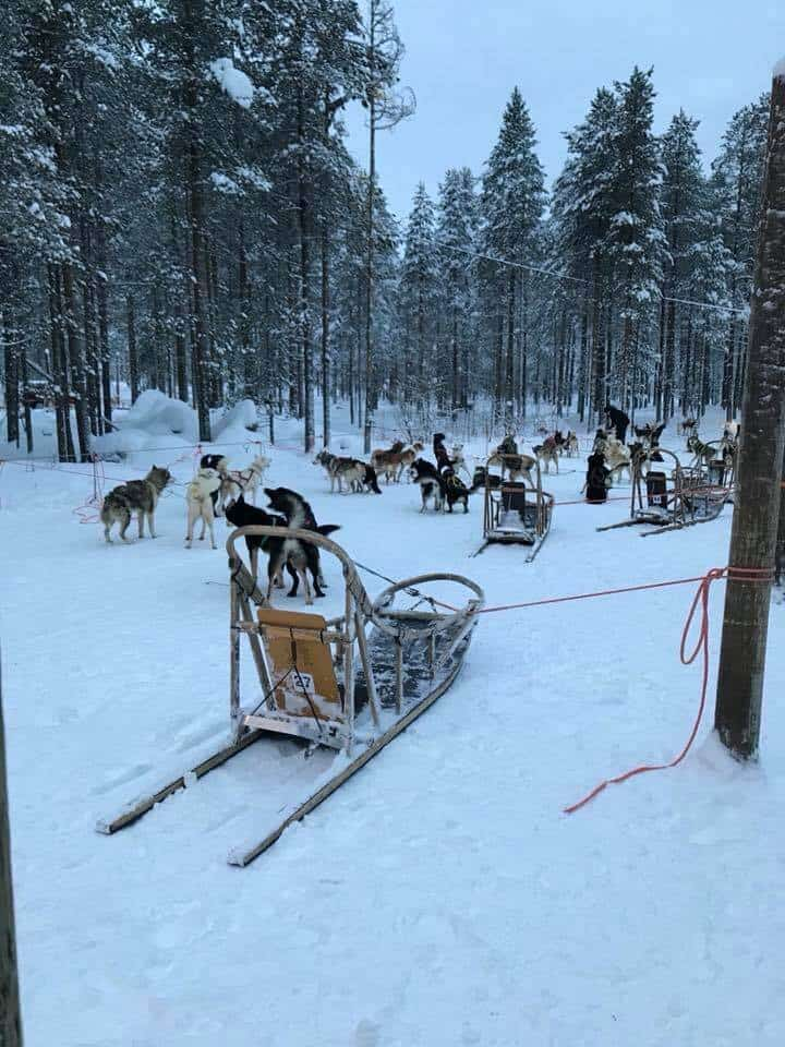 Dog sled with dogs in Lapland, Finland
