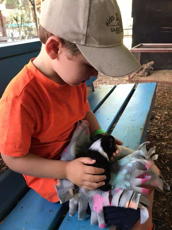Boy holding a guinea pig at the animal rescue