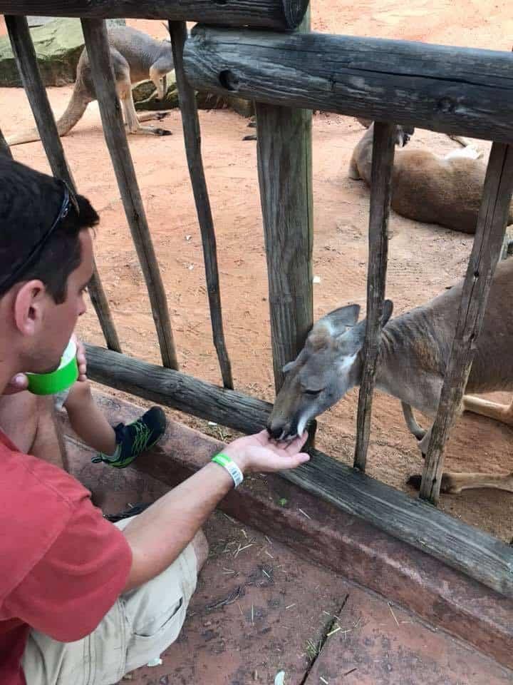 Feeding Kangaroo's at Busch Gardens Tampa
