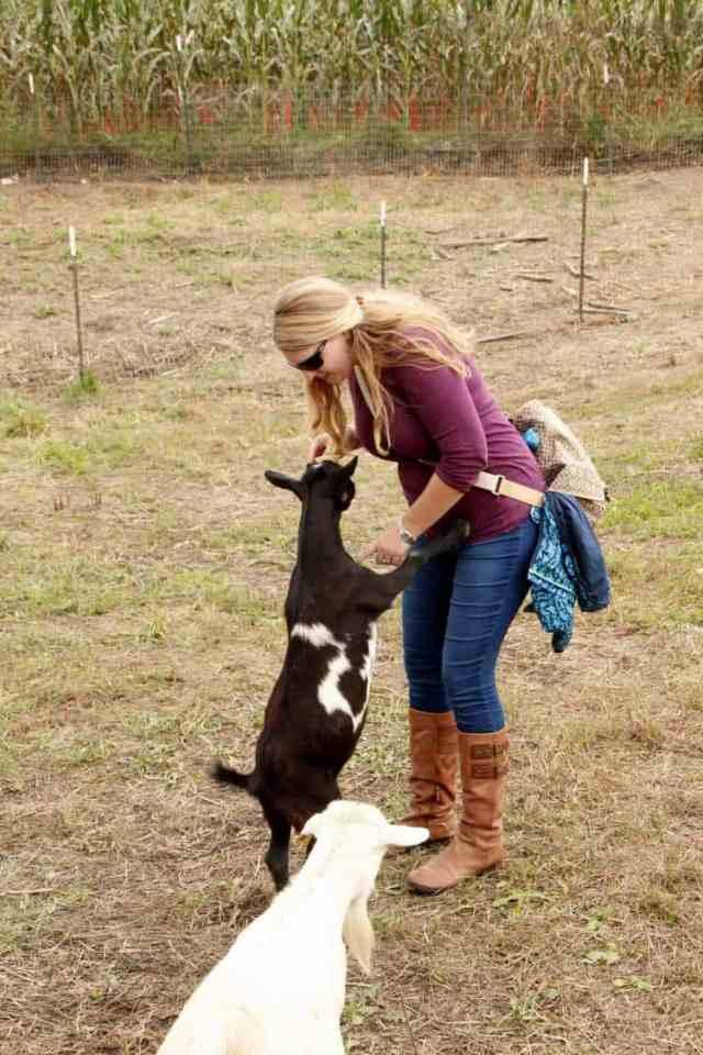 Cox Farms goats