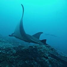 Manta rays (Photo by @sarah__branson)