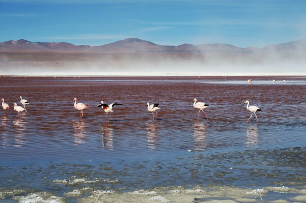 Flamingos chilling in the Red Lagoon