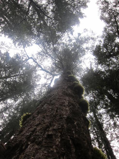 Primeval Forest, Rize Valley 日则沟原始森林
