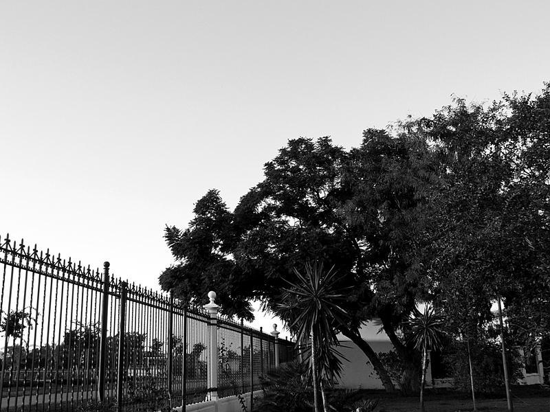 Arboles saltando la valla