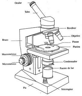 Biologíapuntocom: Práctico: manejo lupa binocular y