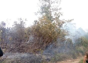 Kebakaran lahan di Kolok Mudiak. (tumpak)
