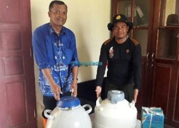 Bantuan inseminasi buatan untuk peternakan di Mentawai. (ers)