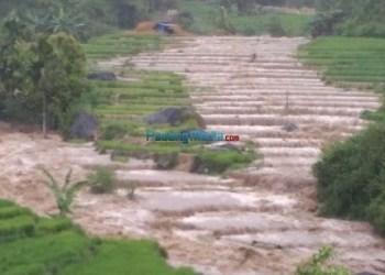 Luapan sungai Batang Gadang di Jorong Pininggiran Ateh dan Pininggiran Bawah, Nagari Nan Tujuah, Kec.Palupuh, Kab.Agam, Sabtu (10/2) merendam puluhan ha sawah warga. (fajar)