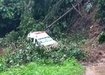 Pohon tumbang di Pasaman