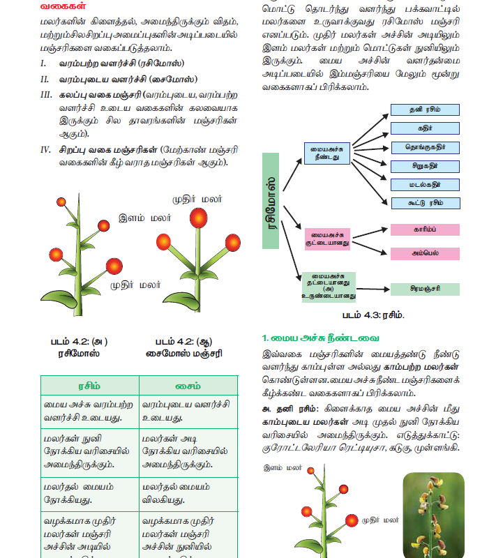 Tamil Medium 11th Standard Bio – Botany Volume 1 Online - tn11thcom 108