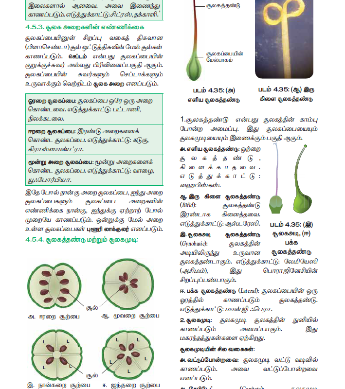 Tamil Medium 11th Standard Bio – Botany Volume 1 Online - tn11thcom 128