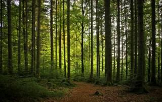 Natuur in Padbroek