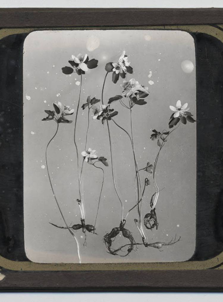 Glass slide of flowers