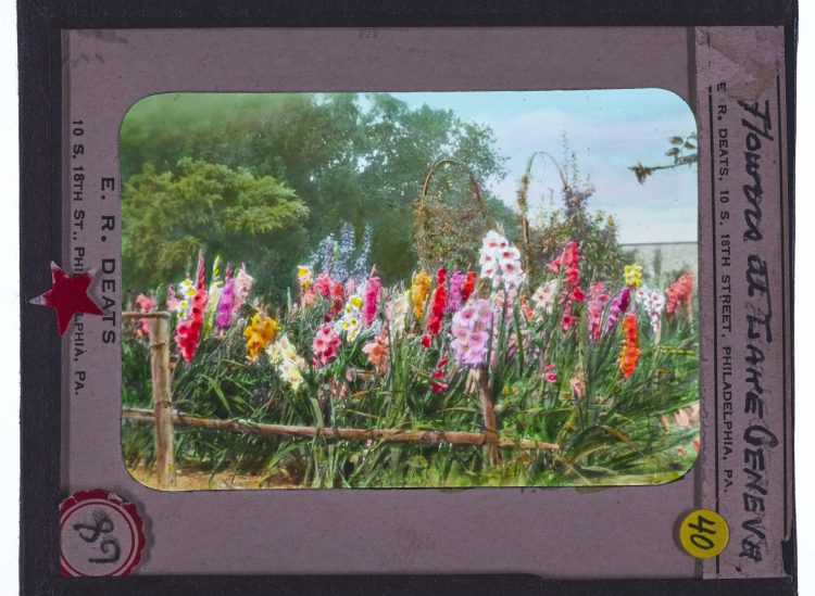 Colorized glass lantern slide of flowers