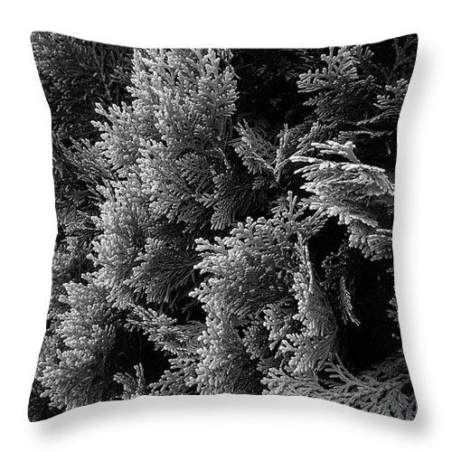 cypress branches black and white photograph throw pillow