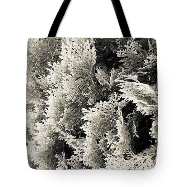 abstract monochrome cypress photograph tote bag