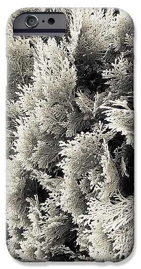 monochrome cypress photograph phone case