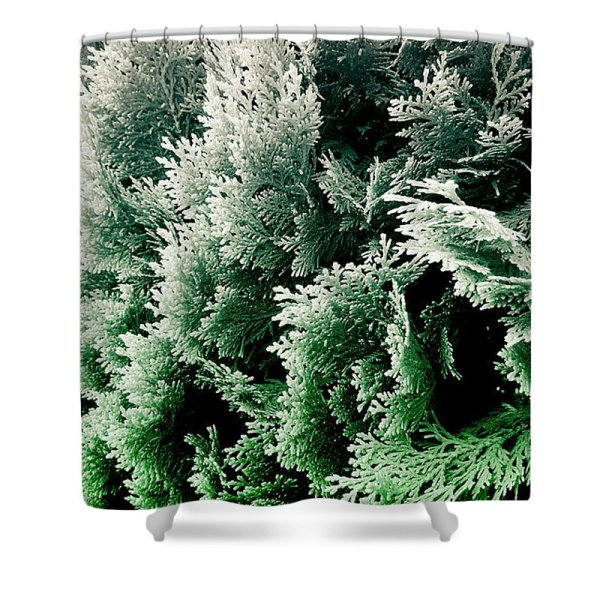 cypress foliage photograph No.5 curtain