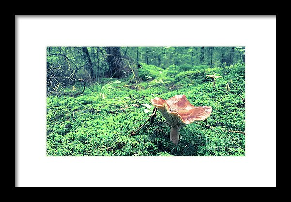 Mushroom in the woods print