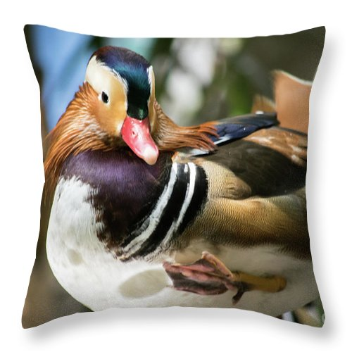 Mandarin duck raising one foot pillow