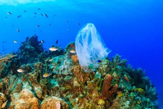Plastic on Reef Shutterstock