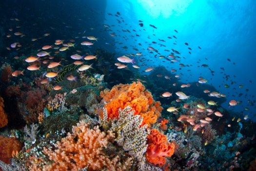 healthy-coral-reef