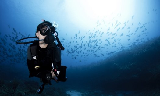 Diver Underwater - Scuba Diver - School of Fish