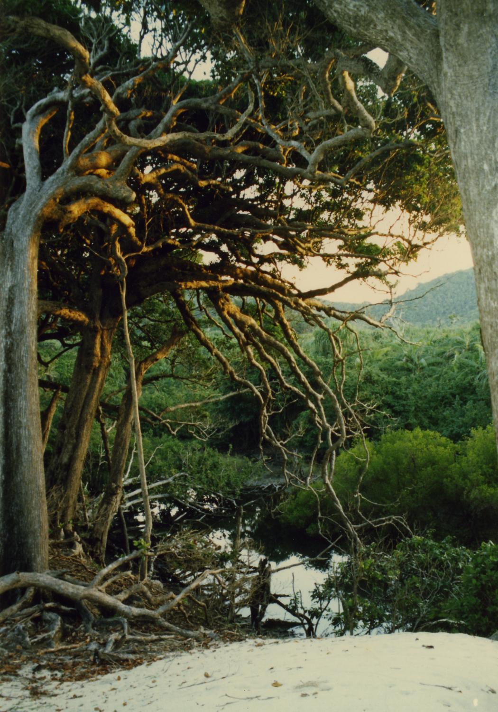 rainforestpool
