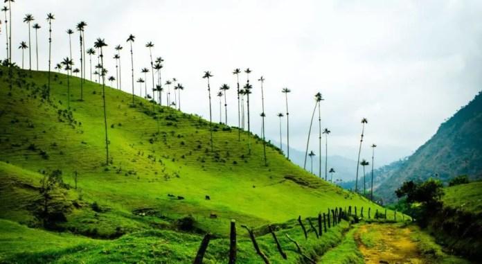 donde se encuentra el valle del cocora