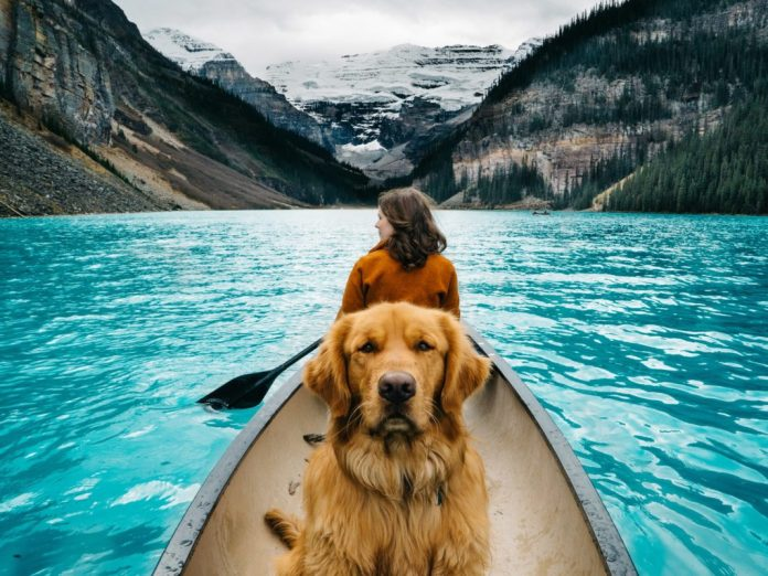 Emigrar-con-mascotas