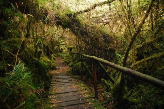 bosque encantado chile patagonia