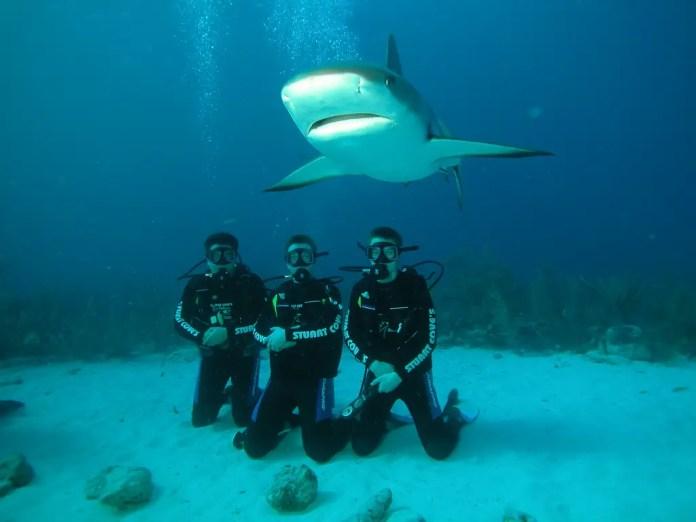 nadar con tiburones es peligroso