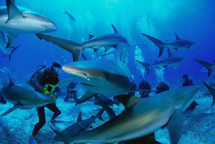 buceo con tiburones sudafrica