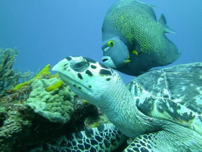 fauna marina de mexico