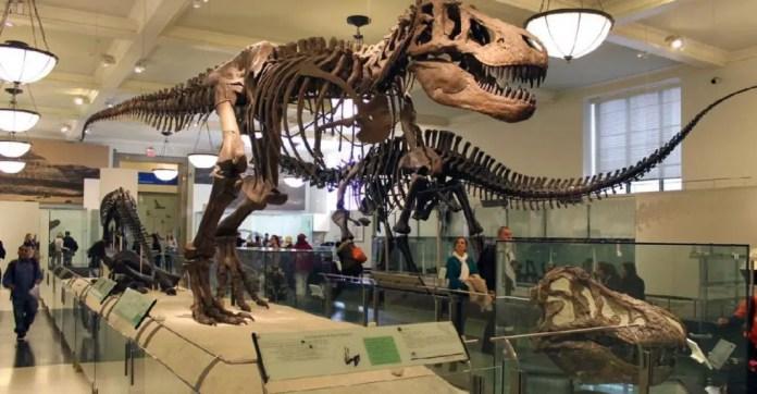 museo-americano-de-historia-natural-nueva-york