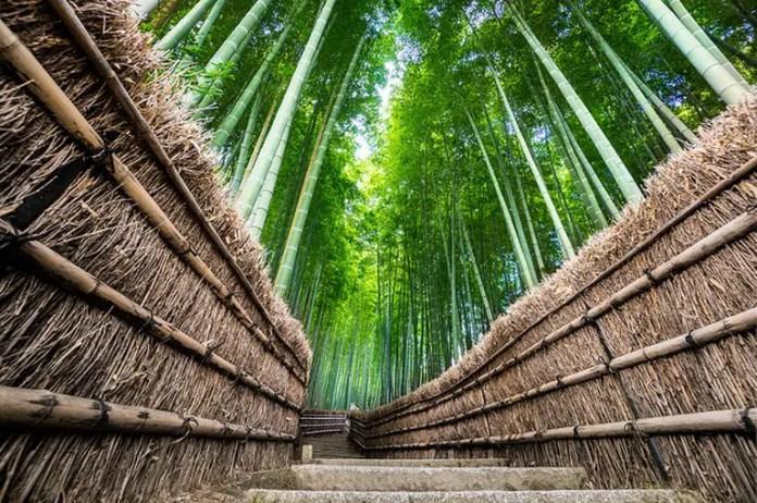 Visita Japón