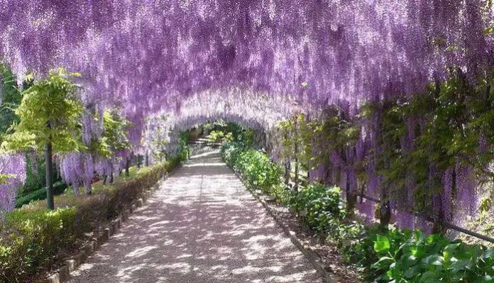 jardines en florencia