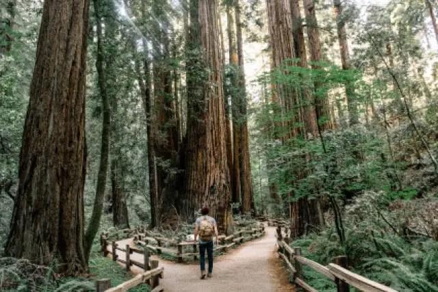 parque nacional muir woods