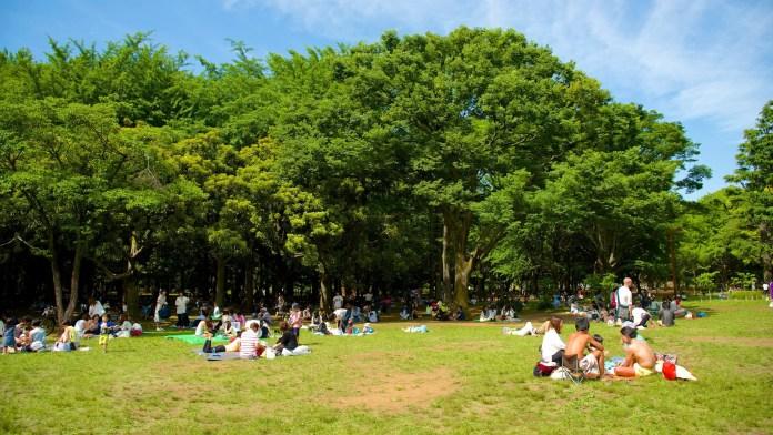 Parque Yoyogi tokyo