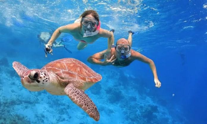 Nado con tortugas en Riviera Maya: Akumal