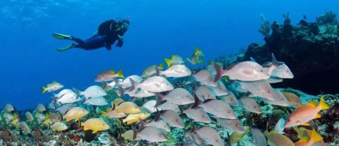 Submarinismo en Riviera Maya