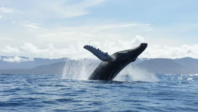 Tours de avistamiento de ballenas en Bahía Solano